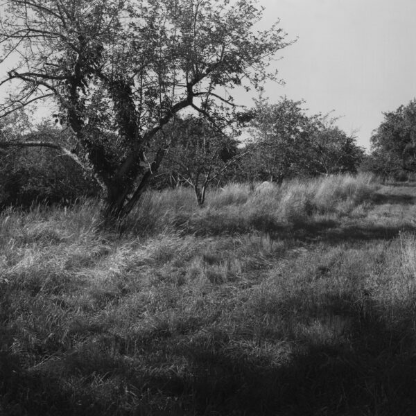 Jenkins-Lueken Orchards, New Paltz, NY, 1991