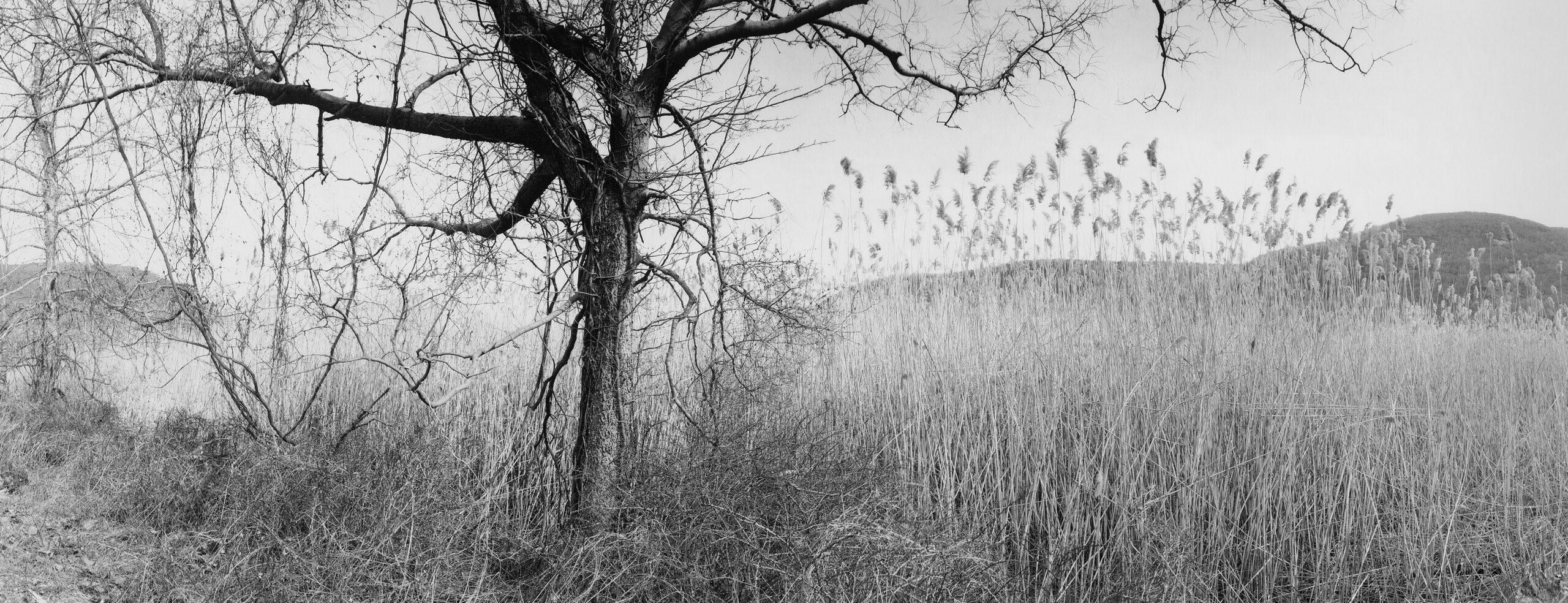 Iona Island, Stony Point, NY, 1994